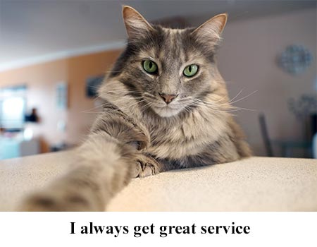Cats Expects Great Appliance Services Maytag Repair