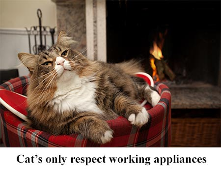 Cats Respect Working Appliances Maytag Repair
